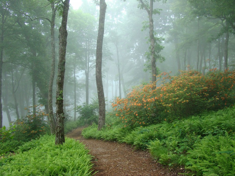 Southern Highlands Reserve Master Plan Amp Garden Design W