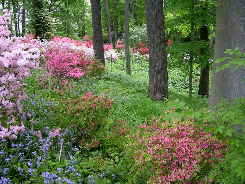 Winterthur Garden Restoration